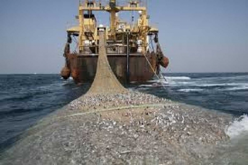 Breaking News: Nelayan Rohil Kepung 13 Unit Kapal Pukat Harimau asal Sumut