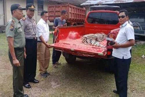 Sering Resahkan Warga, Buaya Sepanjang 3 Meter di Kuansing Ditangkap dan Diserahkan ke Polisi
