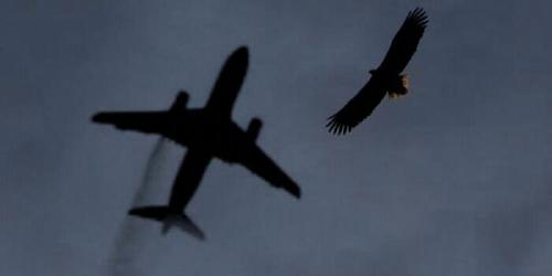 Baru Lepas Landas, Pesawat Garuda Terpaksa Mendarat Lagi Gara-gara Tabrak Burung