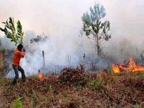 Waspada, Cuaca Ekstrem di Riau Bisa Pemicu Karhutla