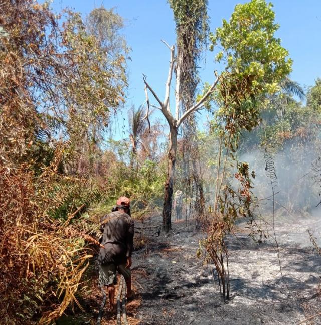 Diduga Api Puntung Rokok, Dua Hektar Lahan di Desa Tenggayun Raya Membara