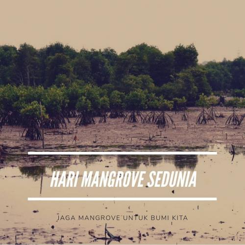 Komunitas BMC Rupat Ajak Masyarakat Lestarikan Mangrove