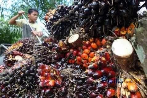 Produksi Naik, Harga Sawit Tertekan Hingga Beberapa Bulan ke Depan