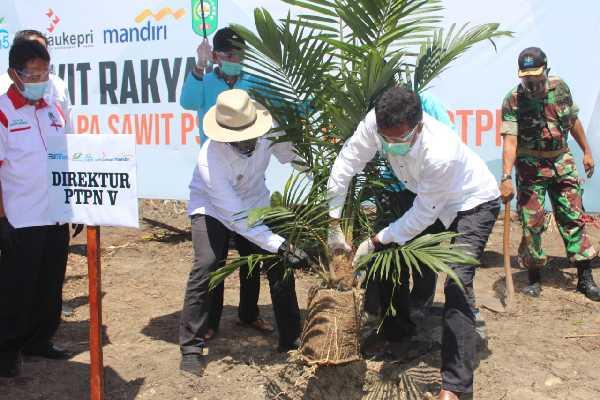 Produktivitas Terjaga, Petani Sawit Riau Komit Bermitra dengan PTPN V