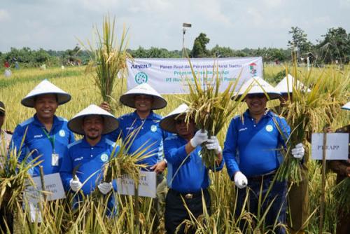 Didukung Program Desa Bebas Api PT RAPP, Desa Sungai Ara Panen Raya Perdana