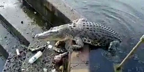 Hiiiii Ngeriiii, Ada Makhluk Menakutkan Berenang di Kolam Masjid