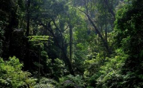 Perkuat Pengelolaan Hutan Tropis Indonesia, Bank Dunia Hibahkan Rp297 Miliar