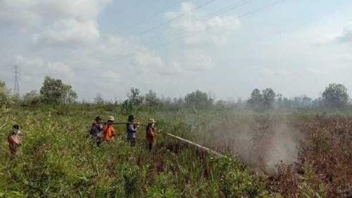 Dua Hektare Lahan di Teluk Makmur Dumai Terbakar