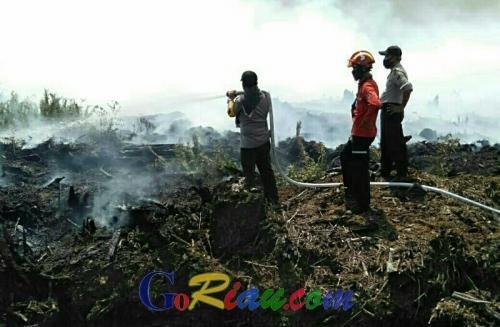 Karhutla Mulai Muncul di Pelalawan Riau, Areal Konsesi PT Arara Abadi Terbakar