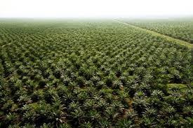 Gubernur Riau Tak akan Mundur Lawan Pemilik Modal Besar yang Mencuri Tanah Negara