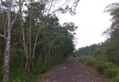 FKKM Riau Usulkan Pengelolaan Hutan Multi Pihak