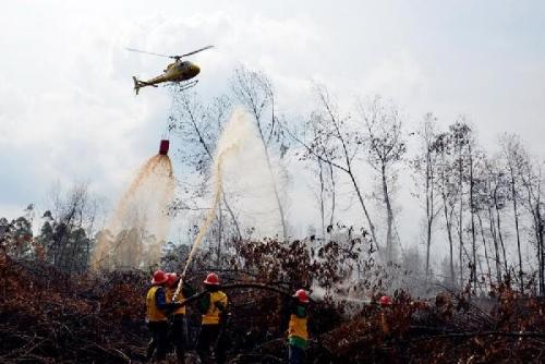 Sebelas Bulan Terakhir, 35 Pembakar Hutan di Riau Ditangkap