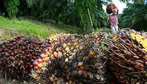 Sawit Hanya Sumbang Asap, Riau Minta Jatah Bagi Hasil CPO